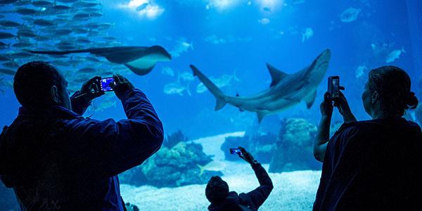 IL_Attractions_oceanario